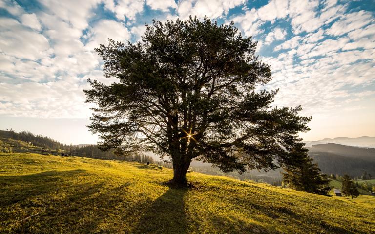 Global Warming – een groot verhaal klein gemaakt