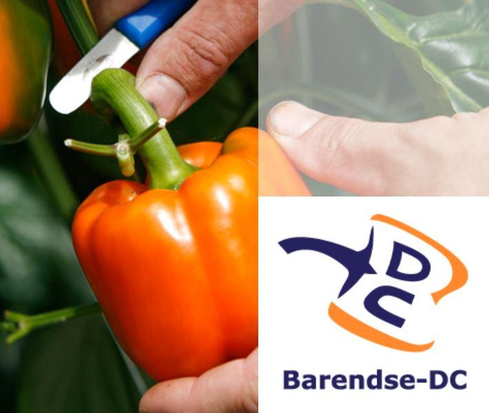 Excursie voor leden – Barendse paprika
